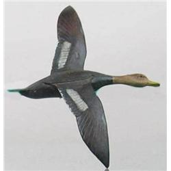 Miniature flying black duck with a 6 1/2 in wing
