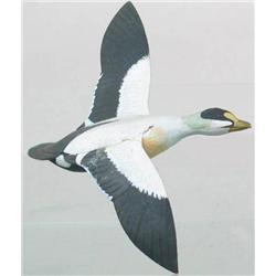 Miniature flying eider drake with a 6 in wing spa