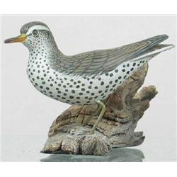 Miniature spotted sandpiper by Jess Blackstone, C