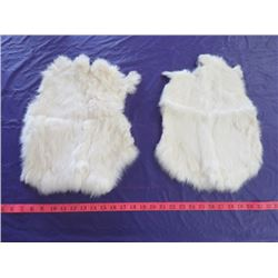 LOT OF 2 WHITE RABBIT PELTS