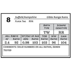 Lot 8 - Suffolk/Hamp