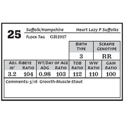 Lot 25 - Suffolk/Hamp