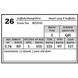Lot 26 - Suffolk/Hamp