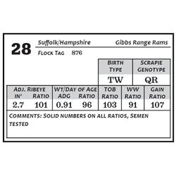 Lot 28 - Suffolk/Hamp