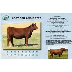 Lot - 35 - LOST CRK ANGIE 9707