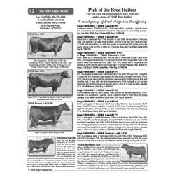 Pick of the Bred Heifers