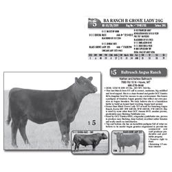 Lot - 5 - BA RANCH B GROVE LADY 24G