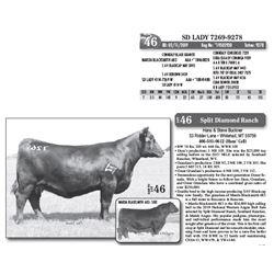 Lot - 46 - SD LADY 7269-9278