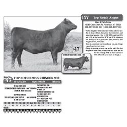 Lot - 47 - TOP NOTCH MISS CHINOOK 932