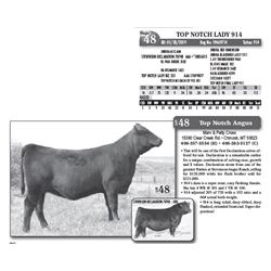 Lot - 48 - TOP NOTCH LADY 914
