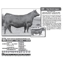 Lot - 49 - TOP NOTCH BARBARAMERE 810