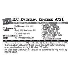 Lot - 55A - ICC Everelda Entense 9731