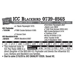 Lot - 32E - ICC Blackbird 0739-8565