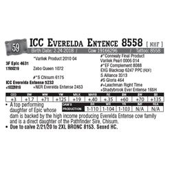 Lot - 59 - ICC Everelda Entence 8558 [ NHF ]