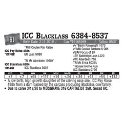 Lot - 61 - ICC Blacklass 6384-8537