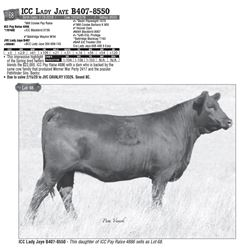 Lot - 68 - ICC Lady Jaye B407-8550