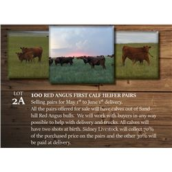 100 RED ANGUS FIRST CALF HEIFER PAIRS