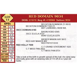 RED DOMAIN 9034