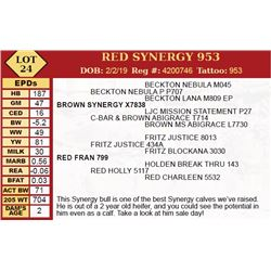RED SYNERGY 953