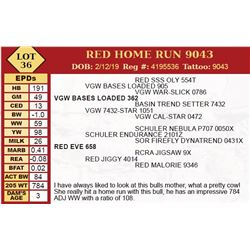 RED HOME RUN 9043