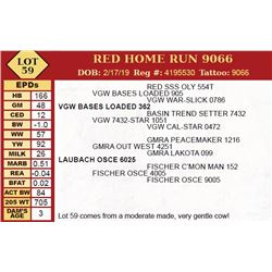 RED HOME RUN 9066