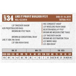 LIKE IT PROFIT BUILDER 9131