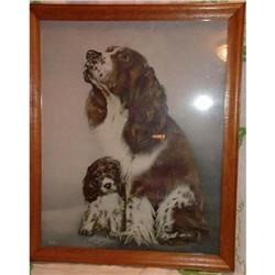 Springer Spaniel Lithograph Soulful and Wistful#1367657