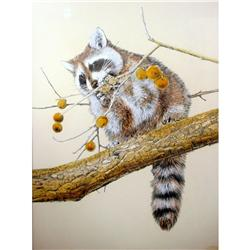 Hans Paul Luetcke, Watercolor Raccoon