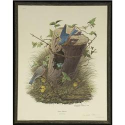 LITHOGRAPH RICHARD SLOAN EASTERN BLUEBIRD SIGNED