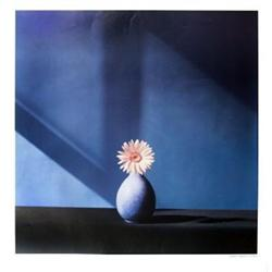 Mapplethorpe  African Daisy  Photographic Paper#2393911