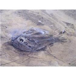 Ocean Side with a fish washed up on it #2395215