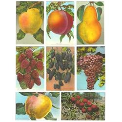 14 VINTAGE FRUIT POSTCARDS 1910 GRAPE APPLE #2377270