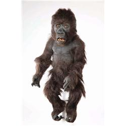 Screen-used animatronic baby Mountain Gorilla from Instinct