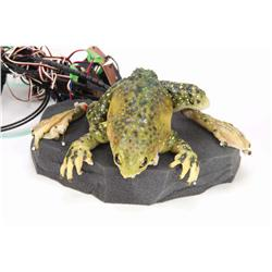 "Screen-used Budweiser ""Er"" animatronic frog from the television commercials"
