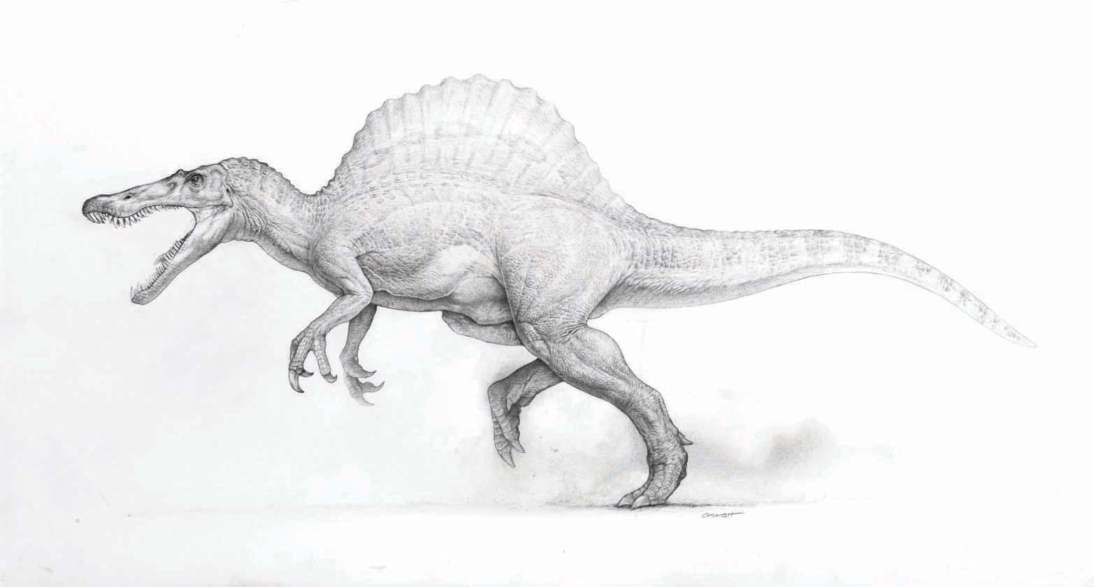"Mark ""Crash"" McCreery Spinosaur artwork from Jurassic Park III Spinosaurus Jurassic Park 3 Drawings"