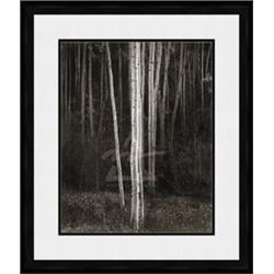 Aspens, Northern New Mexico, 1958 (embossed)  Ansel Adams