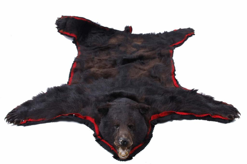 Black Bear Rug 74 Quot From Tip Of Nose To The Tip Of Tail