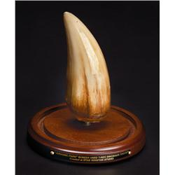 Screen-used T-Rex tooth from Jurassic Park