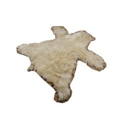 Beautiful Alaskan Polar Bear Rug from the Alaskan Pipe line area, measures 84 x80 ,  in overall good