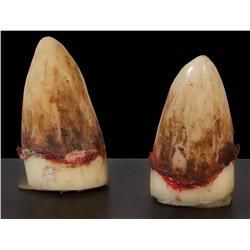 Space Slug teeth from Star Wars: Episode V - The Empire Strikes Back