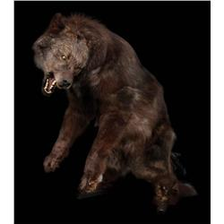 Screen-used cable actuated wolf puppet from Big Fish