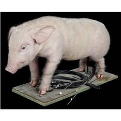 Stage 3 standing Wilbur pig puppet from Charlotte's Web