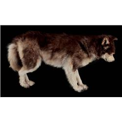 Screen-used full-scale Siberian Husky stunt/stand-in puppet from Eight Below