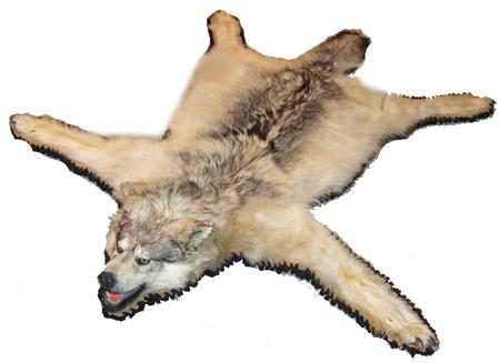 fce5a9ee14 Wolf Skin Rug With Head - Uniquely Modern Rugs