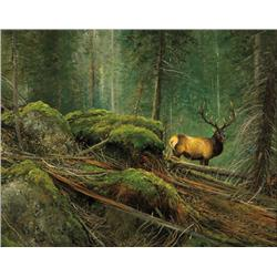 Coleman, Michael - High Country Elk (b. 1946)