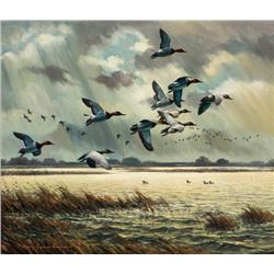 Adamson, Harry - Canvasbacks (b. 1916)