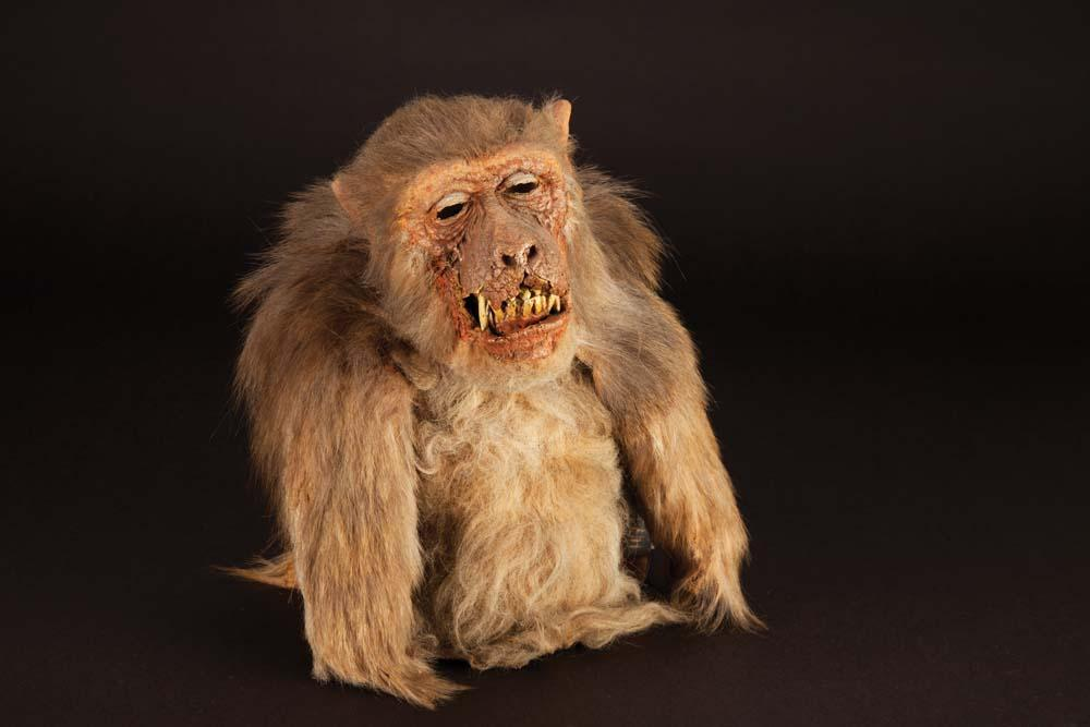 close up monkey puppet from the hunger