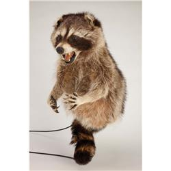 Pair of raccoon puppets from Elf